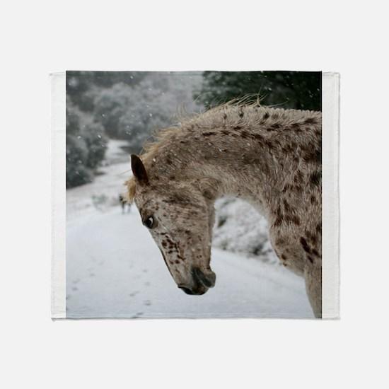 appaloosa in the snow Throw Blanket