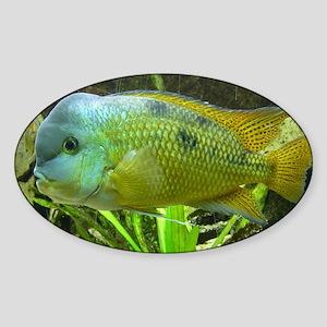 Wonderful Fish Sticker (Oval)