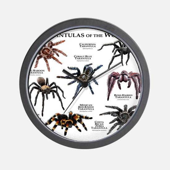 Tarantulas of the World Wall Clock