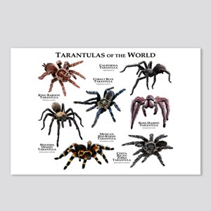 Tarantulas of the World Postcards (Package of 8)