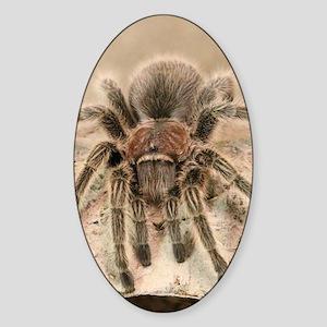 Rosehair Tarantula Sticker (Oval)