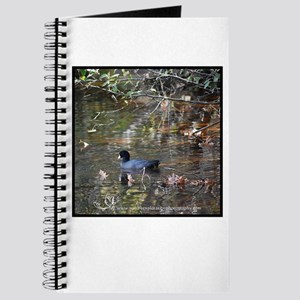 Reflective Coot Journal