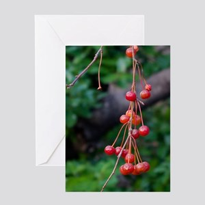 Red Winter Berries Greeting Card