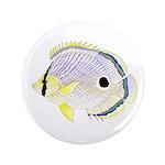 Foureye Butterflyfish 3.5
