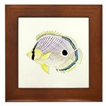 Foureye Butterflyfish Framed Tile