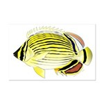 Oval Butterflyfish fish Posters