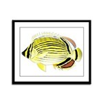 Oval Butterflyfish fish Framed Panel Print