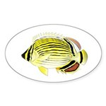 Oval Butterflyfish fish Sticker