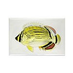 Oval Butterflyfish fish Magnets
