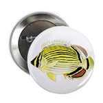 Oval Butterflyfish fish 2.25