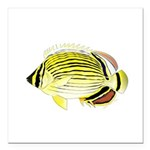 Oval Butterflyfish fish Square Car Magnet 3