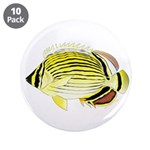 Oval Butterflyfish fish 3.5