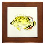Oval Butterflyfish fish Framed Tile