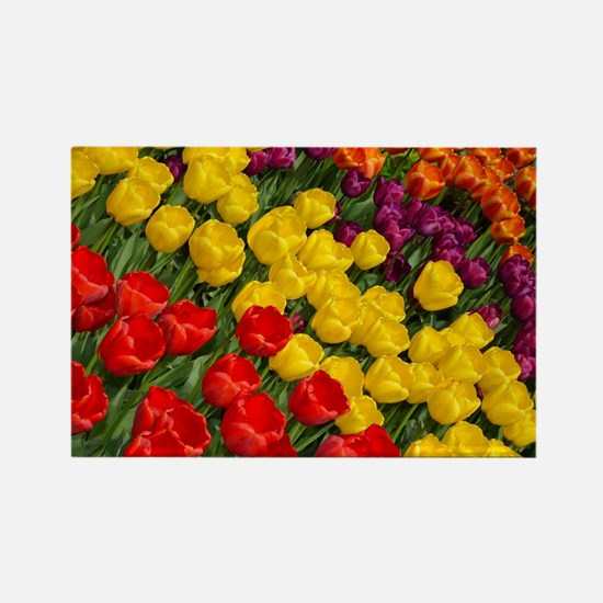 Colorful spring tulips in rows Rectangle Magnet