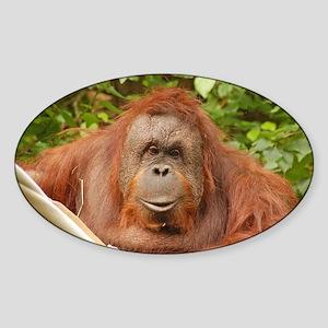 Cute brown orangatan Sticker (Oval)