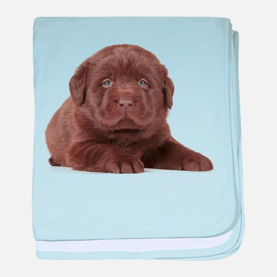 Chocolate Lab Puppy baby blanket