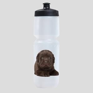 Chocolate Lab Puppy Sports Bottle