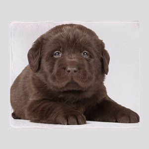 Chocolate Lab Puppy Throw Blanket