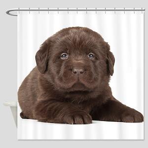 Chocolate Lab Puppy Shower Curtain