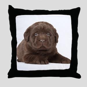 Chocolate Lab Puppy Throw Pillow