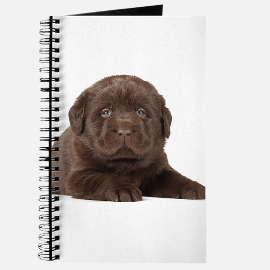 Chocolate Lab Puppy Journal