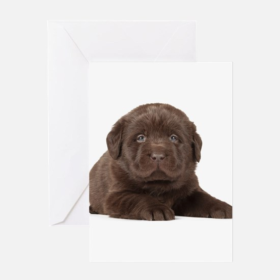 Chocolate Lab Puppy Greeting Card