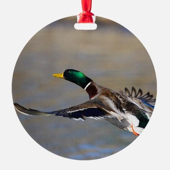 duck in flight Ornament