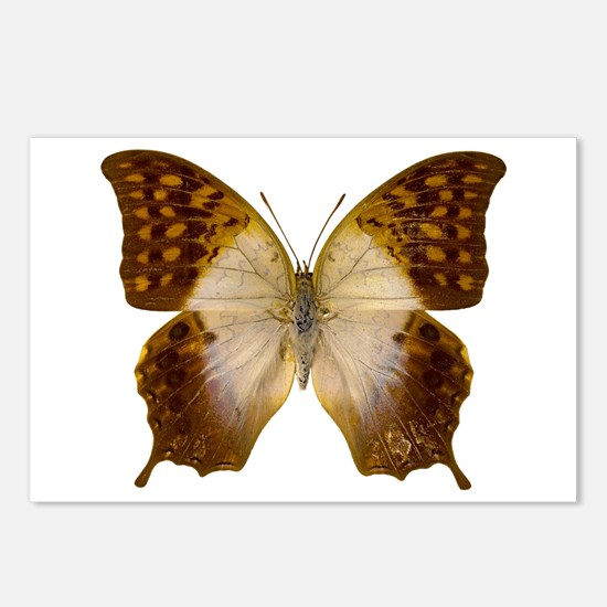 CHARAXES VARANES Postcards (Package of 8)