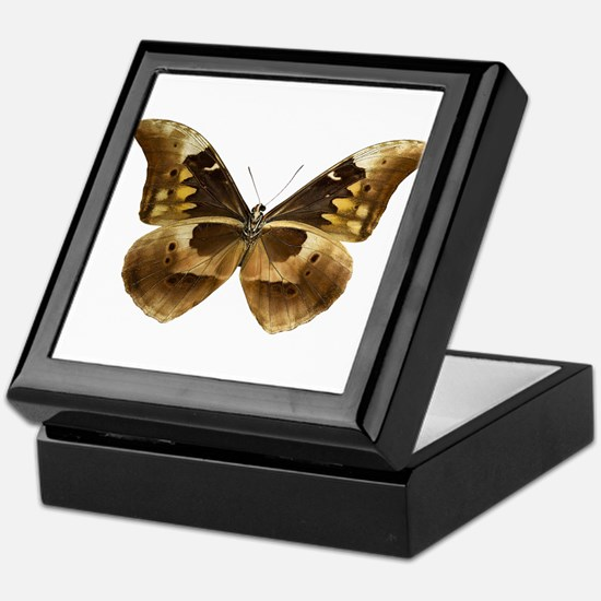 MORPHO RHETENOR V Keepsake Box
