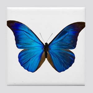 MORPHO RHETENOR D Tile Coaster