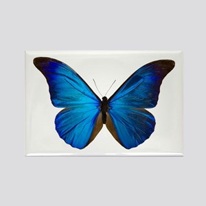 MORPHO RHETENOR D Rectangle Magnet