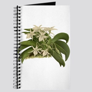 Vintage Orchid Journal