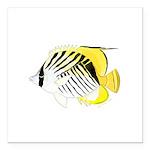 Threadfin Butterlyfish Square Car Magnet 3