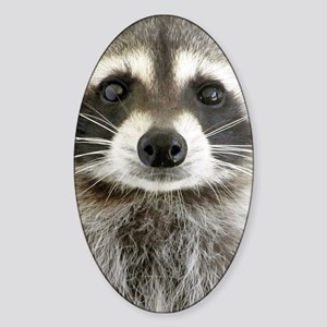 Raccoon Sticker (Oval)
