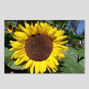 sunflower awake Postcards (Package of 8)