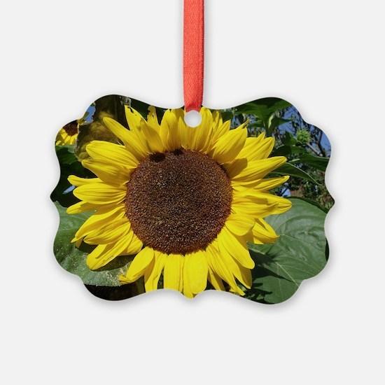sunflower awake Ornament