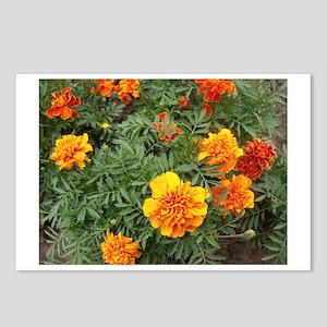 Orange Delight Postcards (Package of 8)