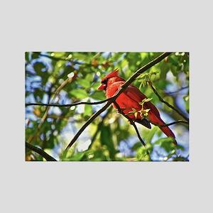 Cardinal Color Rectangle Magnet