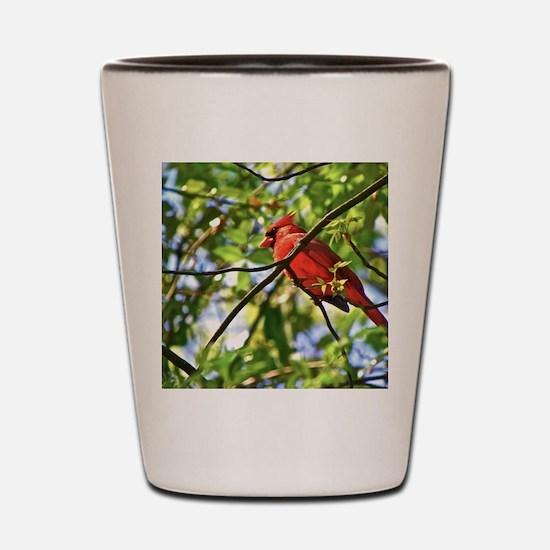 Cardinal Color Shot Glass