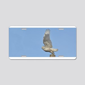 Snowy taking flight Aluminum License Plate