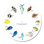 Pacific and Indian Ocean Reef Fish Clock 2 Round C