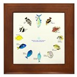 Pacific and Indian Ocean Reef Fish Clock 2 Framed