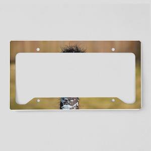 Portrait of an Emu License Plate Holder