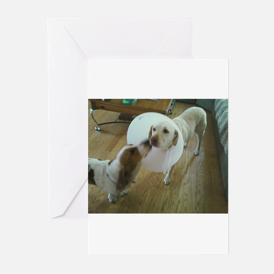 Sick Dog Greeting Cards (Pk of 20)