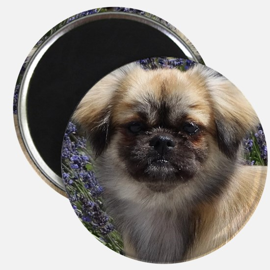 Faithful Tibetan Spaniel Magnet