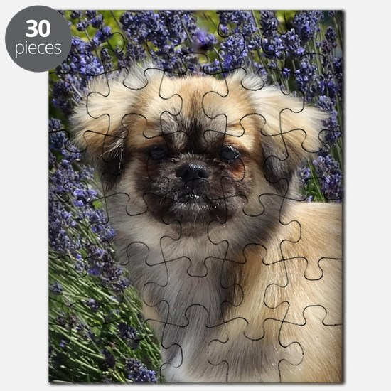 Faithful Tibetan Spaniel Puzzle