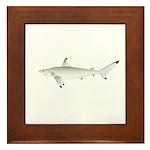 Blacktip Shark Framed Tile