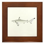 Blacktip Shark Framed Tile