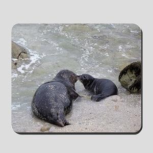 Harbor Seal Mom Kisses Pup Mousepad