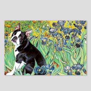 Irises & Boston Ter Postcards (Package of 8)